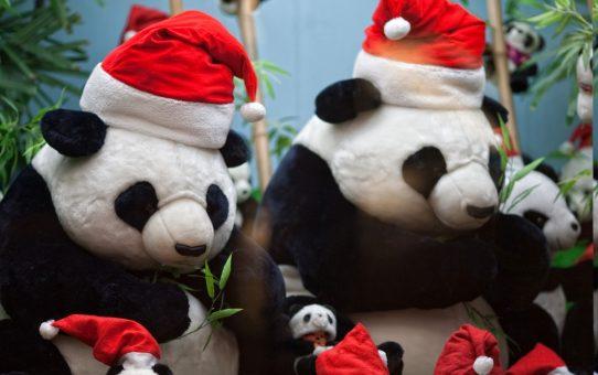 Hongkong & ShenZhen(2009.01.01~01.04).4일차